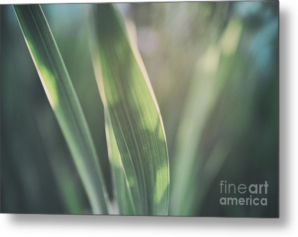 The Allotment Project - Sweetcorn Leaves Metal Print