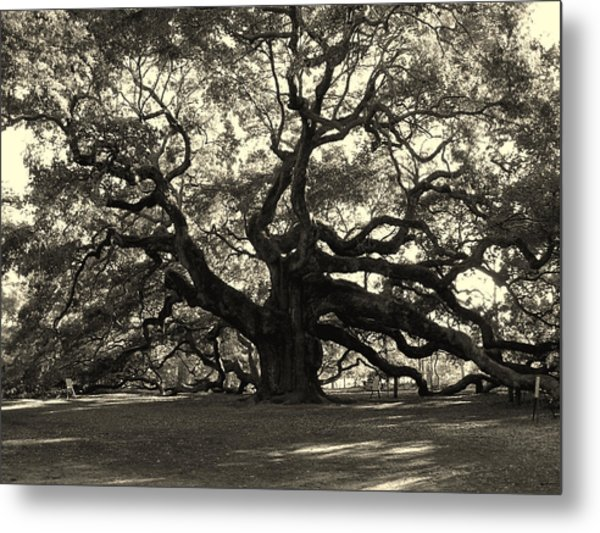 The Angel Oak Metal Print