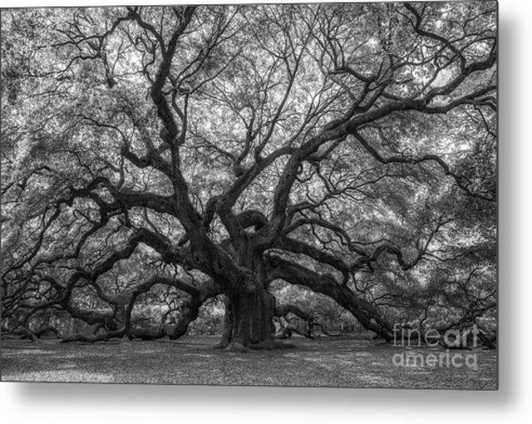 The Angel Oak Tree Bw  Metal Print