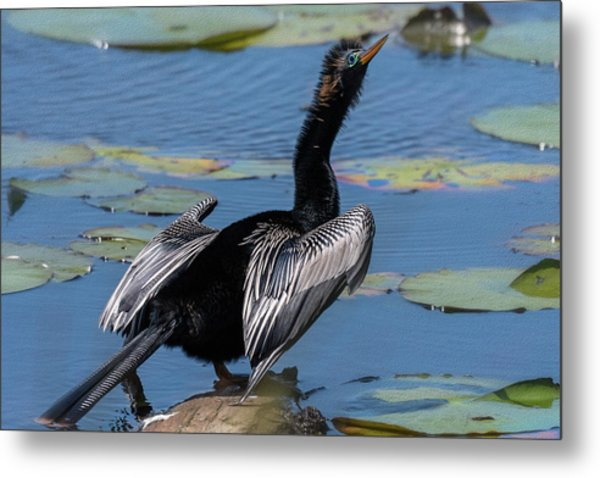 The Bird, Anhinga Metal Print