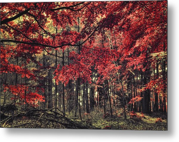 The Autumn Colors Metal Print