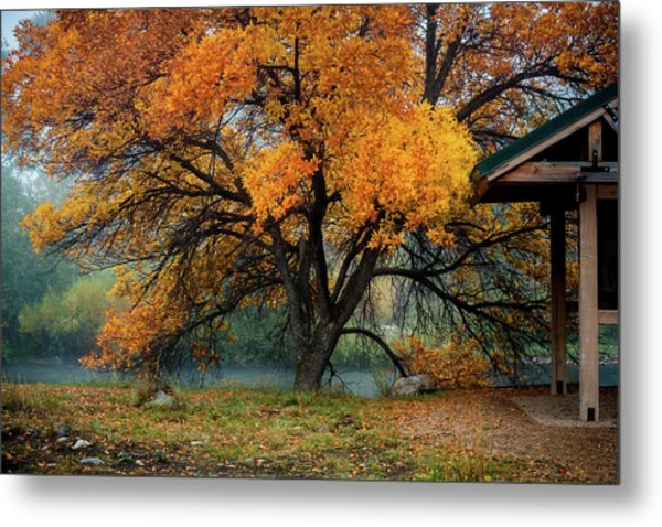 The Autumn Tree Metal Print