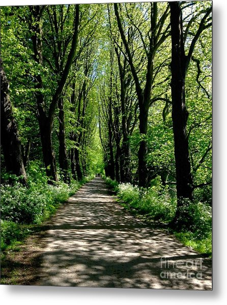 The Avenue Of Limes At Mill Park 3 Metal Print