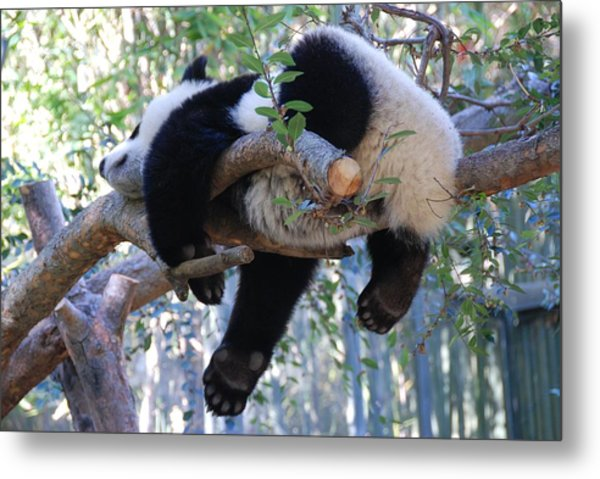 The Baby Panda's Sweet Dream Metal Print