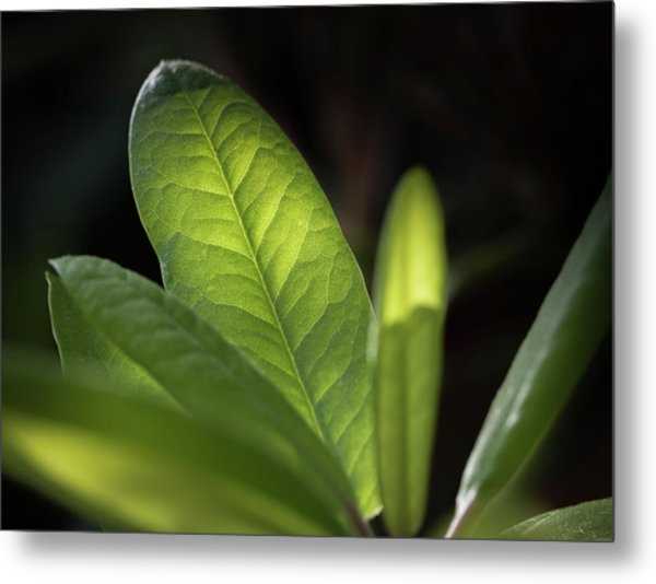The Beauty Of A Leaf - Metal Print
