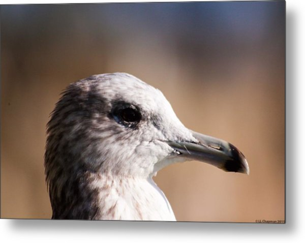 The Best Side Of The Gull Metal Print