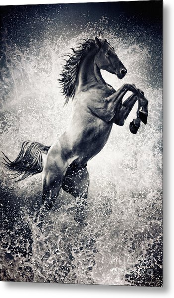 The Black Stallion Arabian Horse Reared Up Metal Print