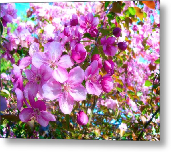 The Blossoms Of Spring Metal Print