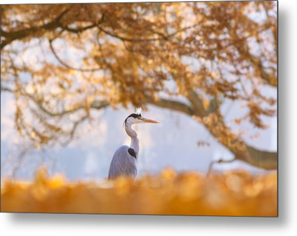 The Blue Heron And The Red Tree Metal Print