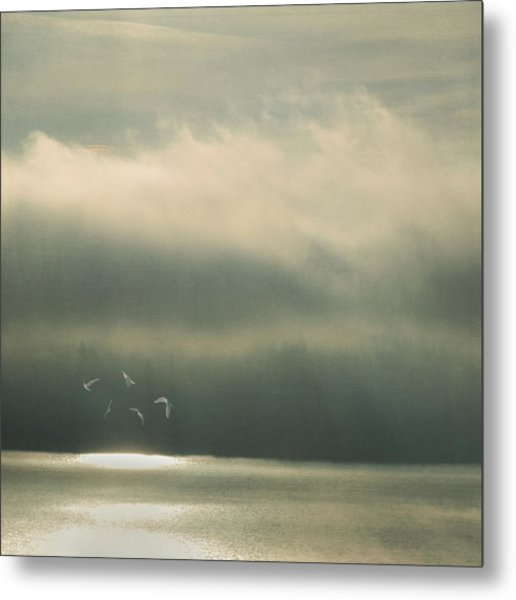 Metal Print featuring the photograph The Bright Spot by Sally Banfill