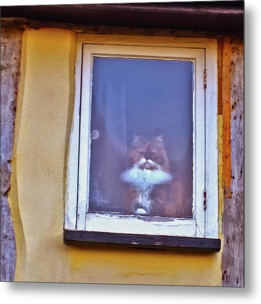 The Cat In The Window Metal Print
