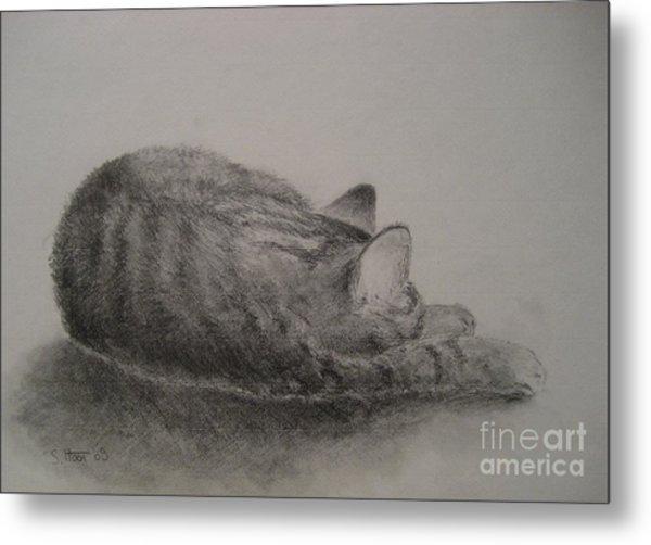 The Cat Series II Metal Print by Sabina Haas