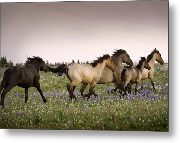 The Chase 1 Metal Print