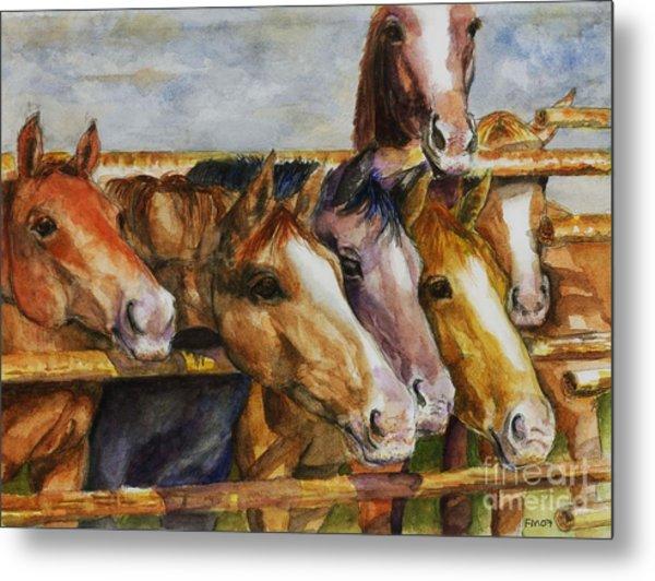 The Colorado Horse Rescue Metal Print