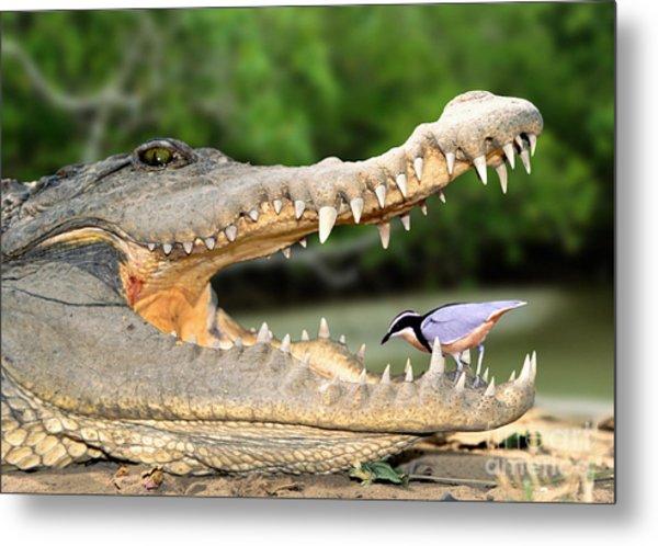 The Crocodile Bird Metal Print