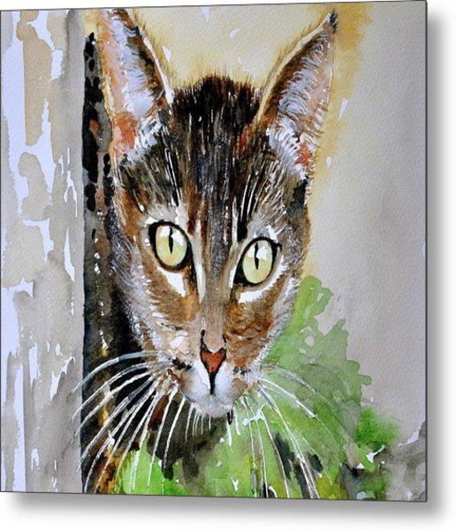 The Curious Tabby Cat Metal Print