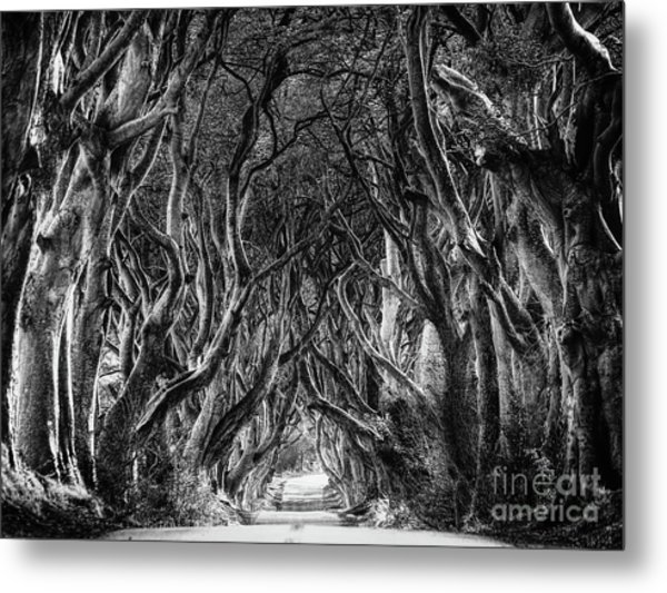 The Dark Hedges Metal Print