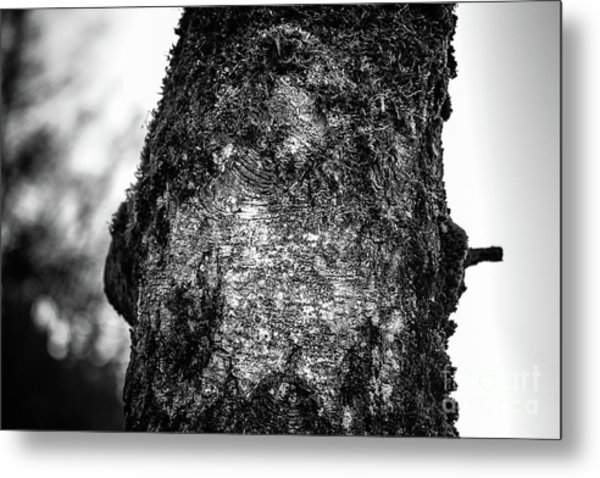 The Eagle In The Tree Metal Print