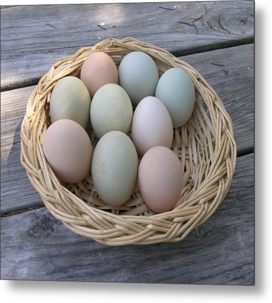 The Eggs Metal Print by Janis Beauchamp