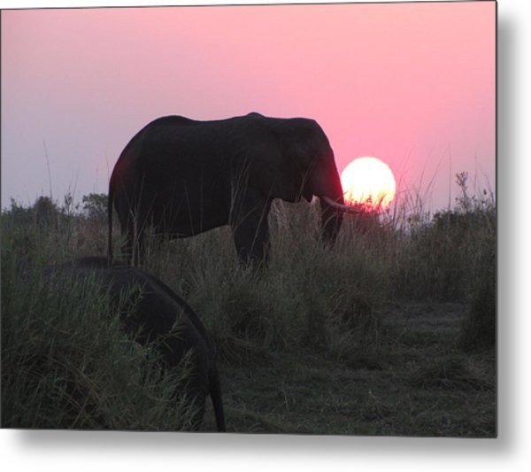 The Elephant And The Sun Metal Print