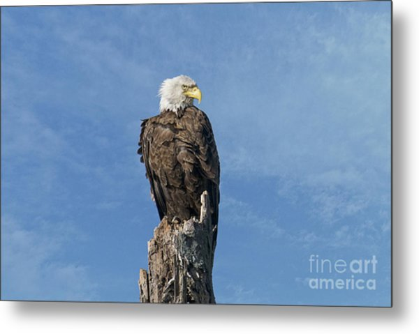 The Eye Of Freedom Metal Print