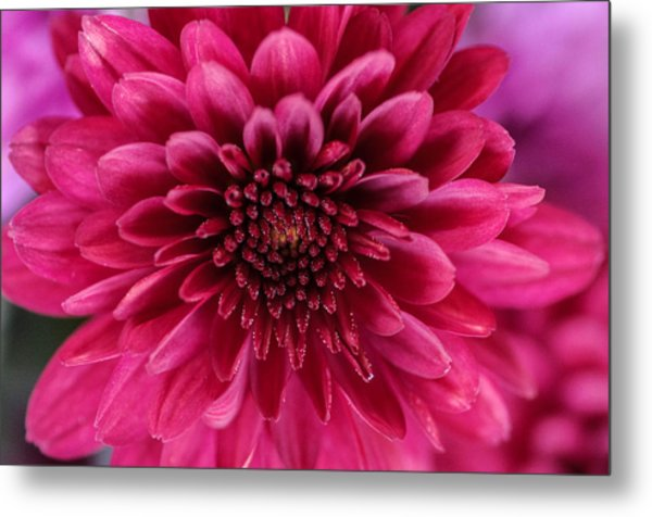 The Eye Of Pink Flower Metal Print
