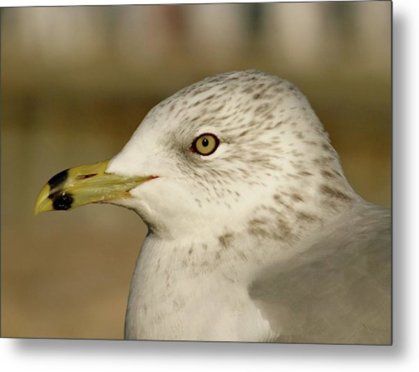 The Eye Of The Seagull Metal Print