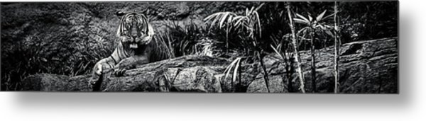 The Eye Of The Tiger Metal Print
