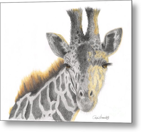 Metal Print featuring the drawing The Eyes Have It by Phyllis Howard