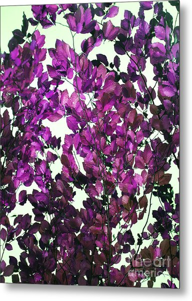 The Fall - Intense Fuchsia Metal Print