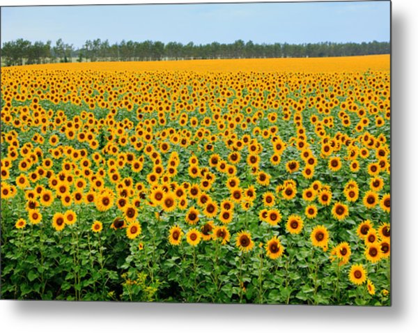 The Field Of Suns Metal Print