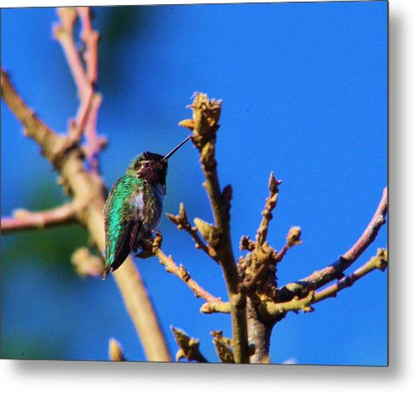 The First Hummingbird Metal Print