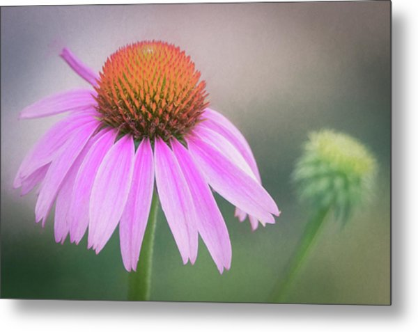 The Flower At Mattamuskeet Metal Print