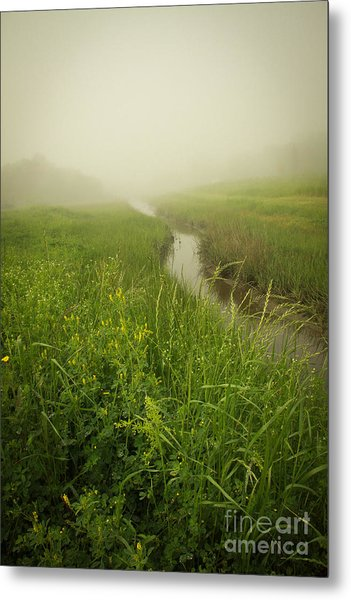 Metal Print featuring the photograph The Foggy Trail by Sandy Adams