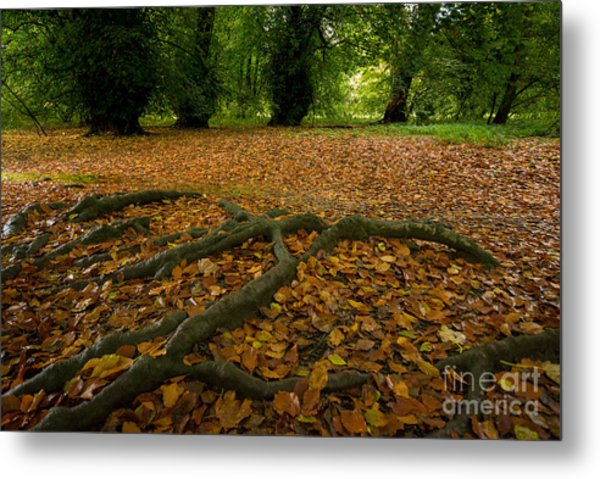 The Forest Floor Metal Print