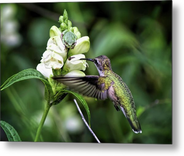 The Frog And The Hummingbird Metal Print