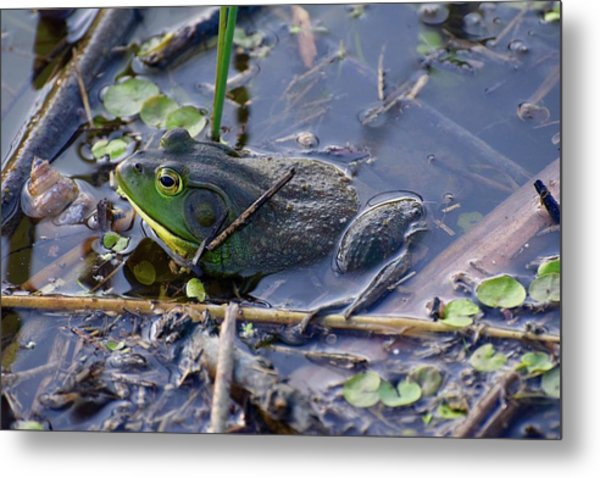 The Frog Remains Metal Print
