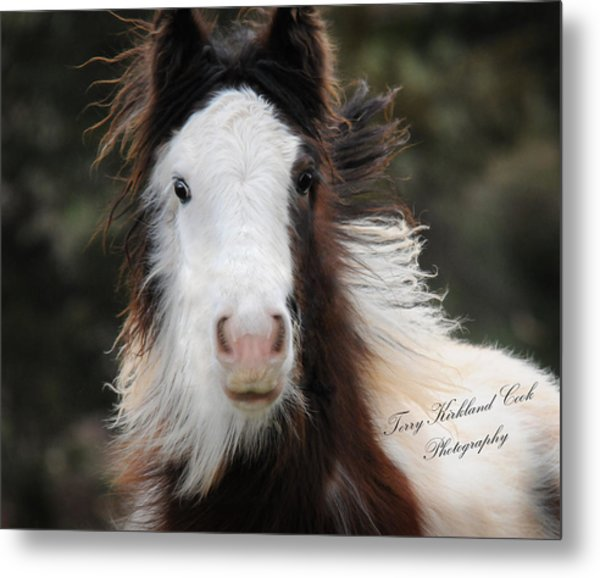 The Fuzziest Gypsy Foal Metal Print