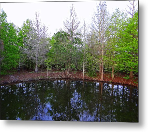 The Gator Hole At Green Cay In Florida Metal Print