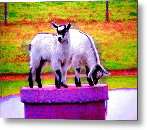 The Goats Metal Print