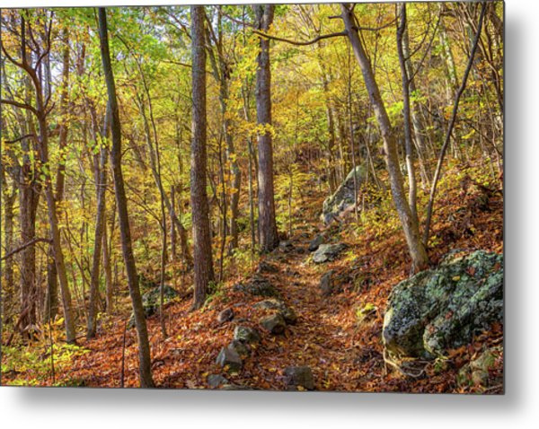Metal Print featuring the photograph The Golden Trail by Lori Coleman