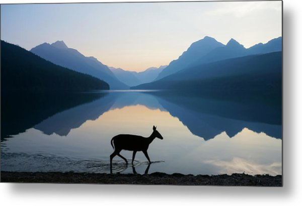Metal Print featuring the photograph The Grace Of Wild Things by Dustin  LeFevre