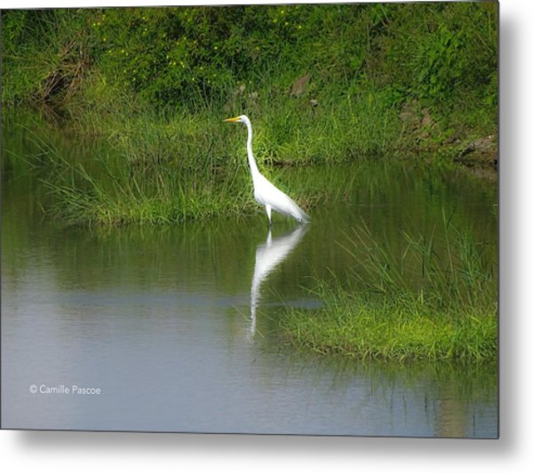Great Egret By The Waters Edge Metal Print