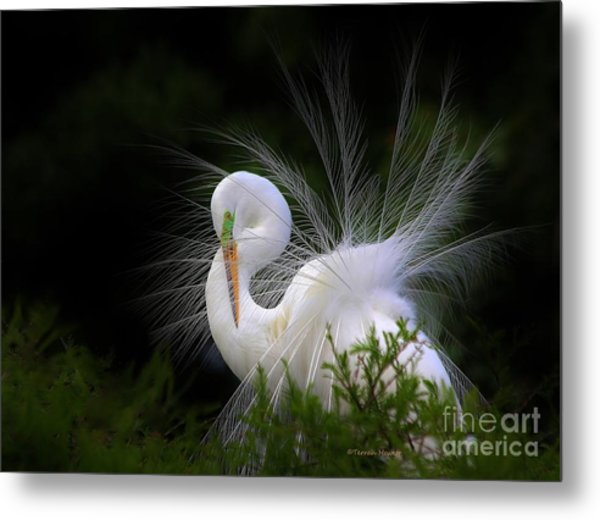 The Great Egret Metal Print
