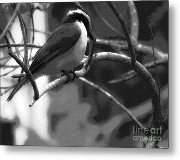 The Great Kiskadee  Metal Print