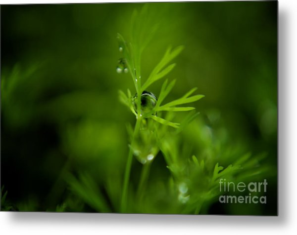 The Green Drop Metal Print
