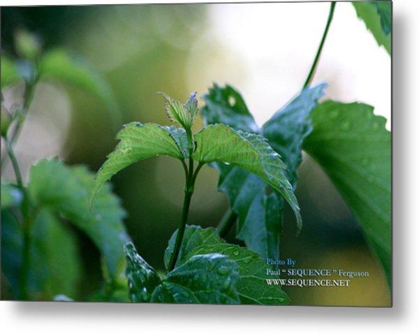 The Green Leaf Metal Print