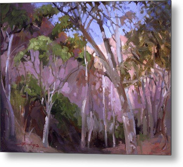 The Gum Grove Catalina Metal Print