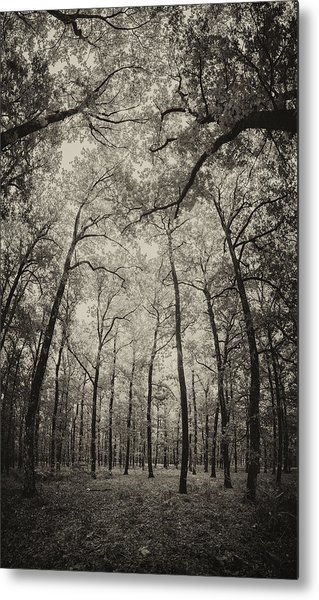 The Hands Of Nature Metal Print