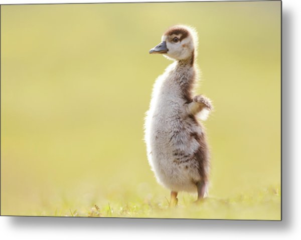 The Happy Chick - Happy Easter Metal Print
